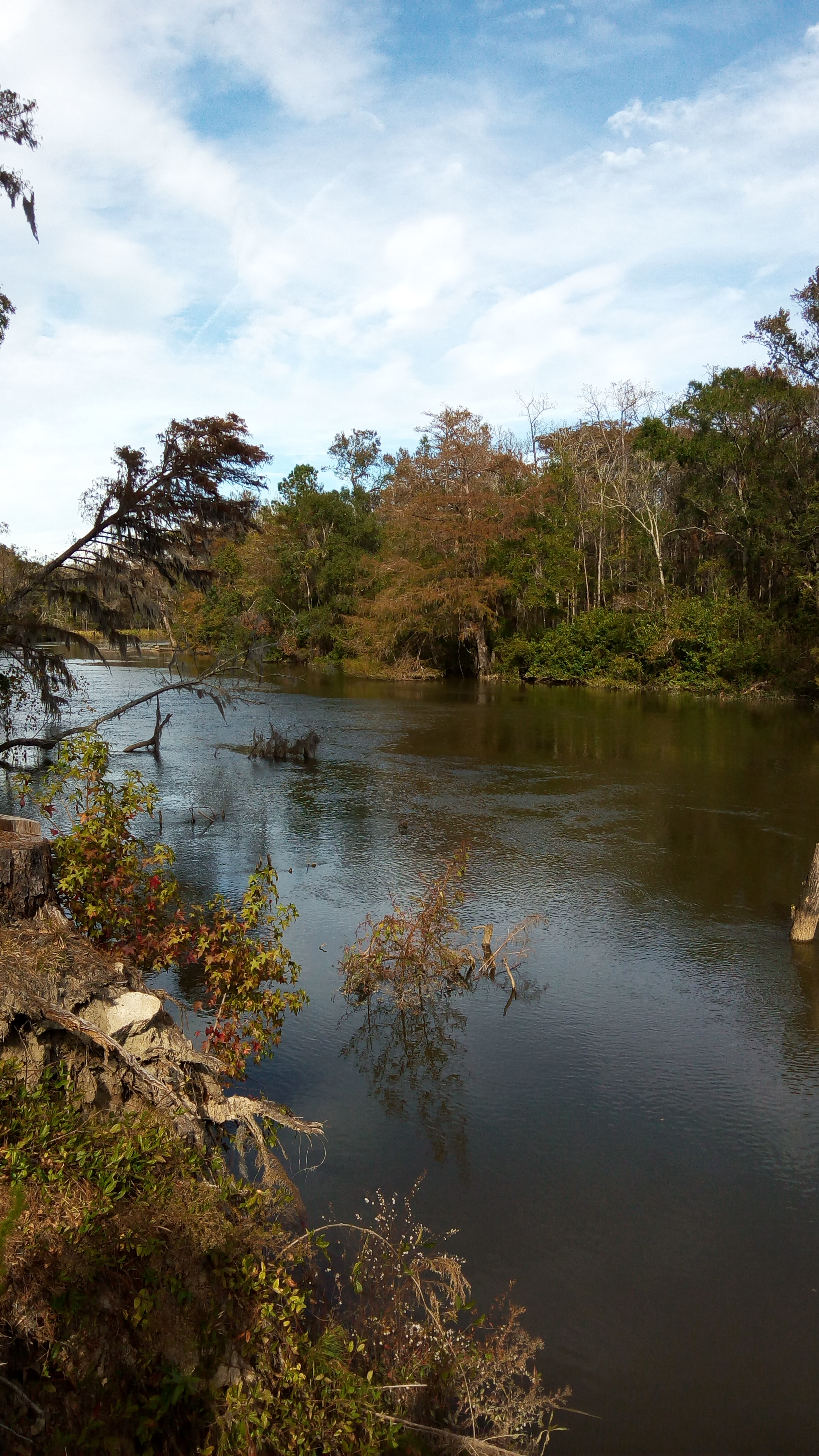 Abercorn Creek Fall 2016 2.jpg