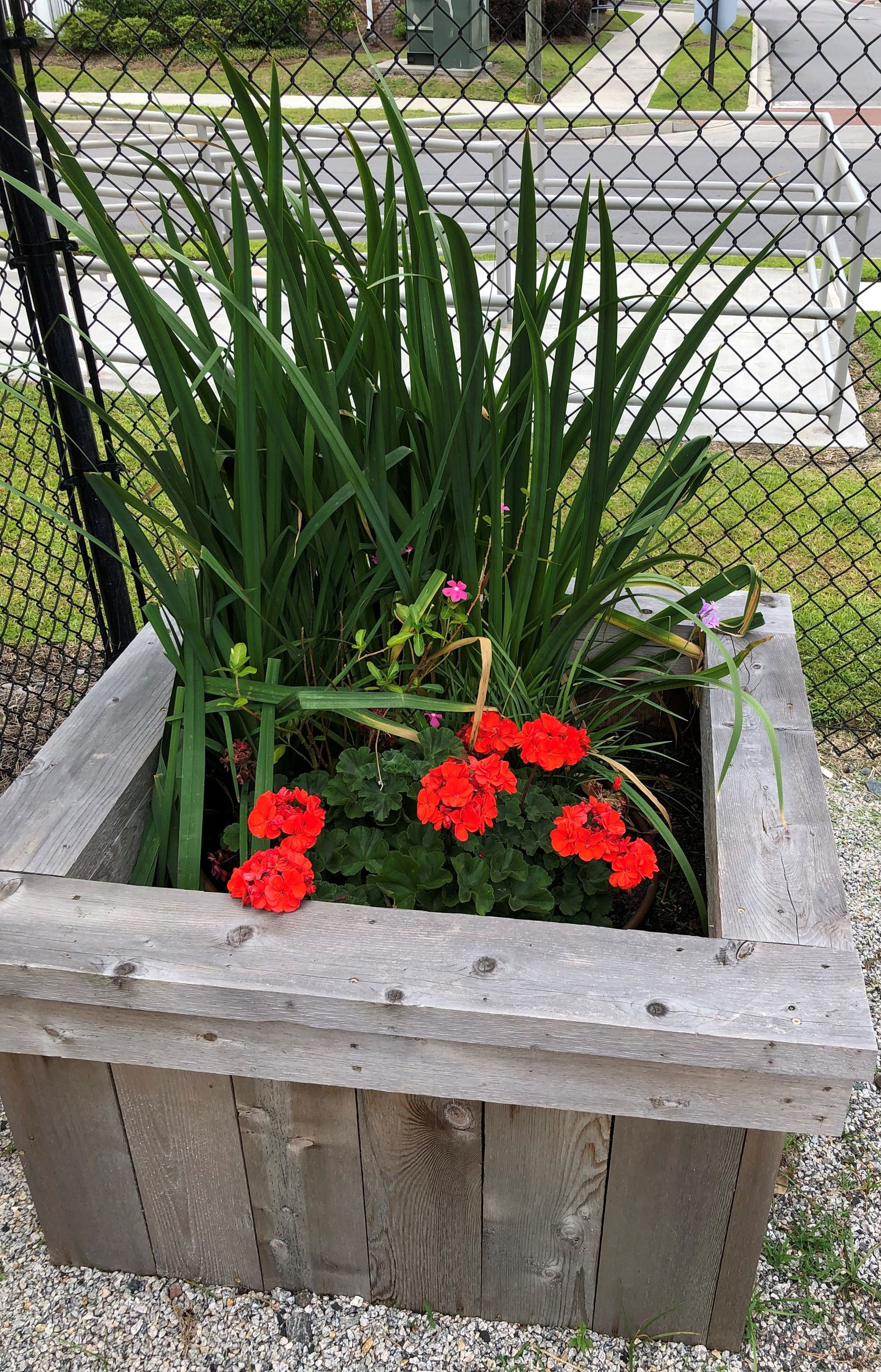 flower box at PARC
