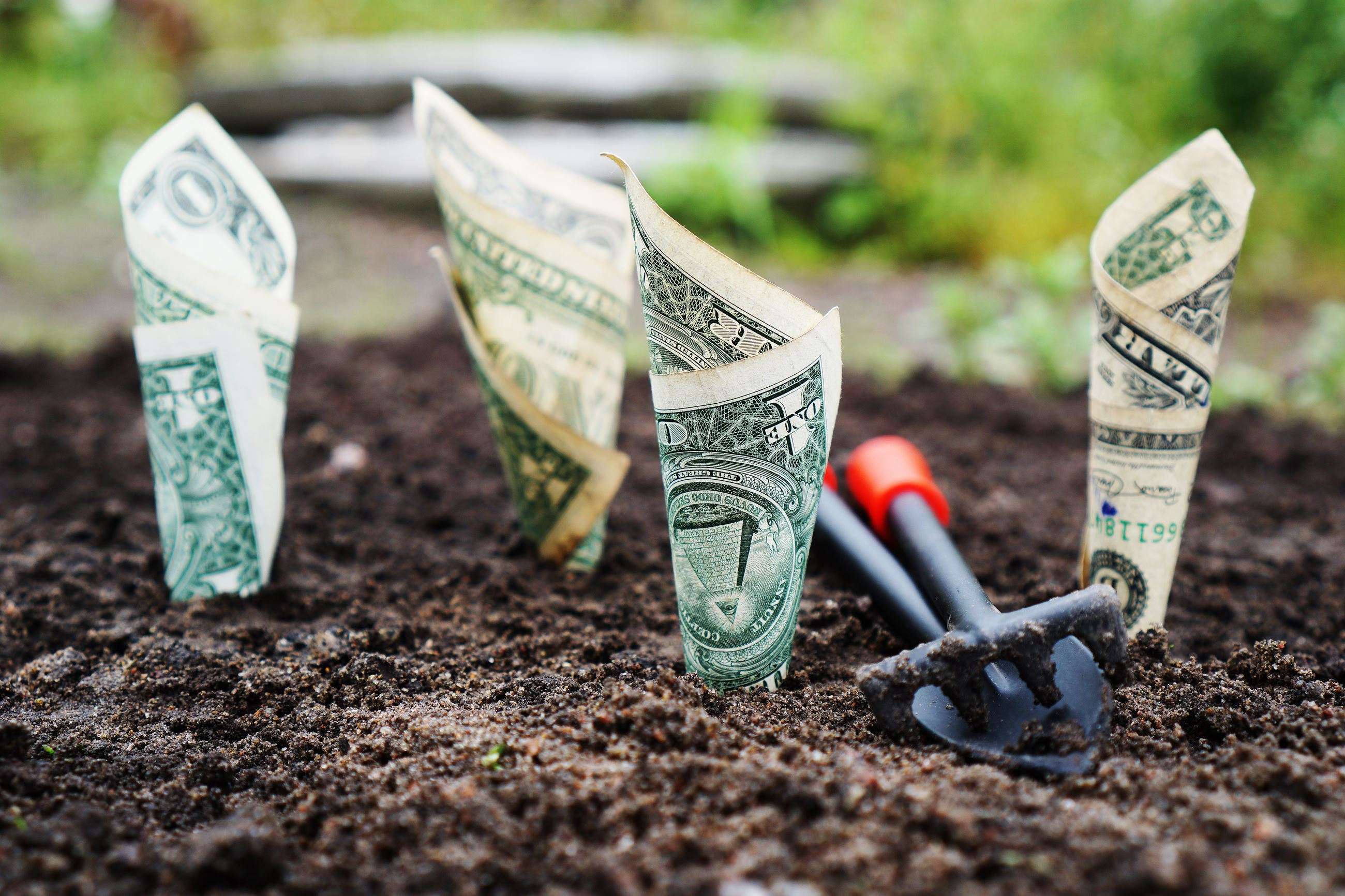 Dollar bills growing from dirt