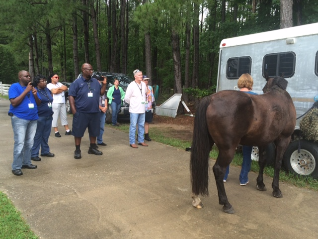 Equine safety class